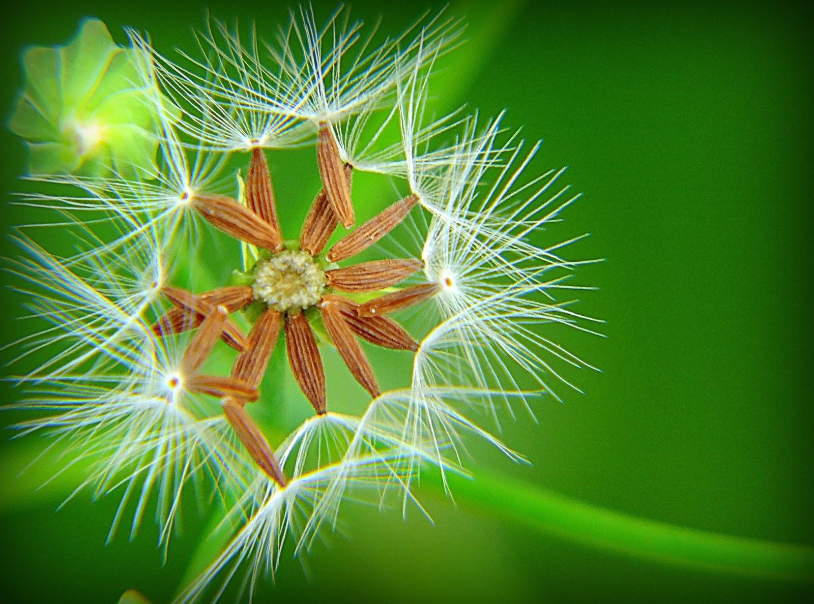 http://aprendendocomasimagens.blogspot.com/2013/08/imponencia-e-simplicidade.html A imponência e a simplicidade juntas. Umas de tão belas; nos passa desapercebido a tua simplicidade, outras de  tão simples se tornam imponentes sem perceber. Umas enfeitam, outras alimentam. Assim é a natureza. Imponente e simples! Mais linda se torna pois em nenhum momento vem nos agredir.  Autoria: Cleiton de Carvalho