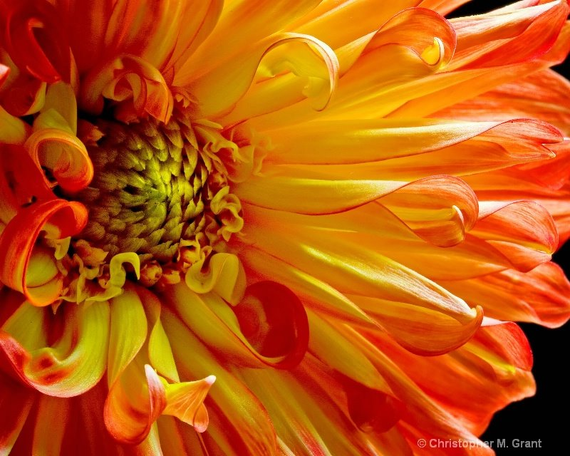 lovely flowers flowers closeups feel the beauty high