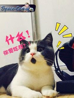 funny animals cat humor