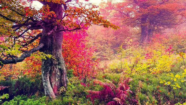 Arboles y hojas de Otoño fondos de la naturaleza