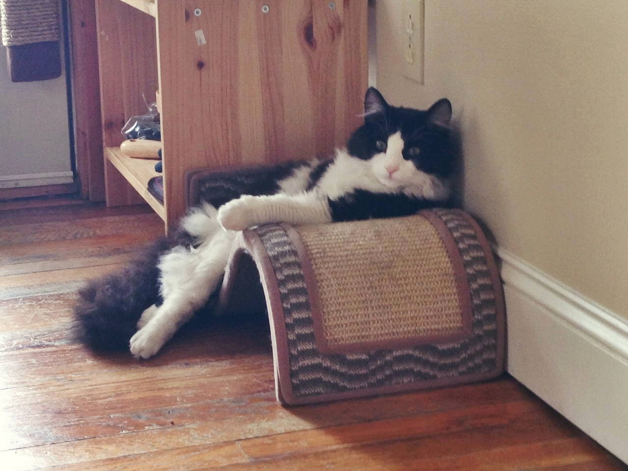 Funny cats - part 99 (40 pics + 10 gifs), cat pictures, cat sits on scratch post