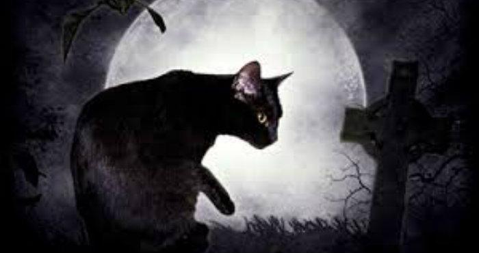 Kucing Terbahaya Dan Tempat Terangker Diprovinsi Riau