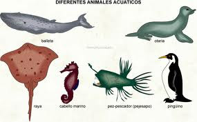 Los animales acuaticos for Peces que no necesitan oxigeno
