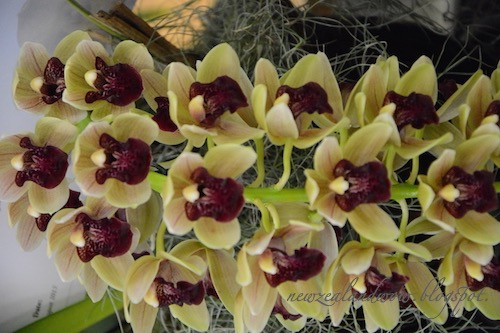 Beauty Orchids