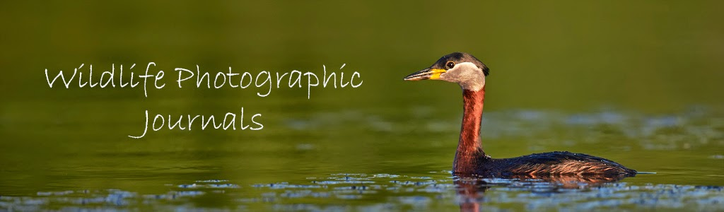 Wildlife Photographic Journals