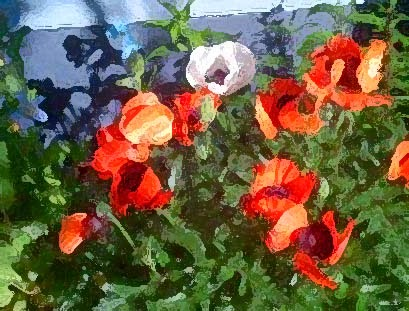Poppies by Anna Nelson.