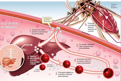 Malária é diagnosticada em menos de três minutos por tecnologia israelense