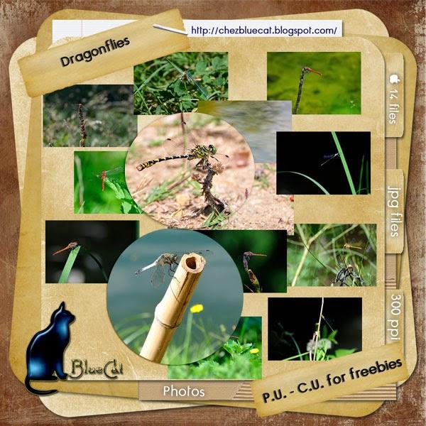 http://3.bp.blogspot.com/-uMprrRjo68I/U2P8T1unkxI/AAAAAAAAE8k/Gx7qLo3Wyuk/s1600/BlueCat_Dragonflies.jpg