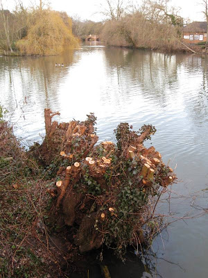 River scene with tree stump