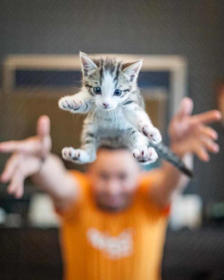 flying kitten, funny cat pictures, funny cats