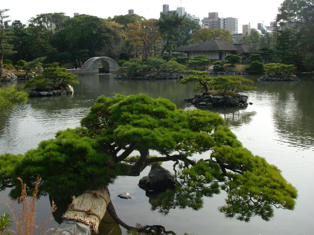jardim japon s rvores arbustos e flores