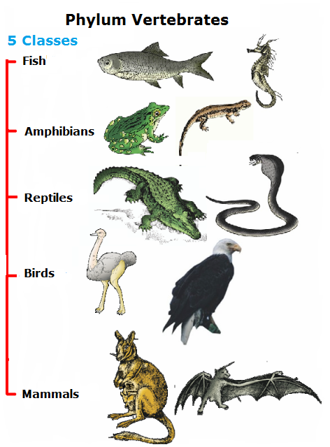 biology phylum notes Taxonomy - the science of classifying organisms why do we need a system to classify and name organisms here are some common names: spider monkey sea monkey sea.
