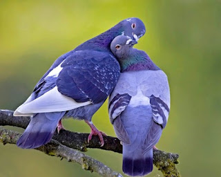 love-birds Wallpaper