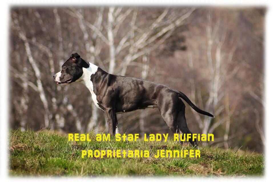 lady ruffian (amstaffordshire)