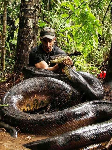 Naturalista usou traje especial para sair vivo de dentro da cobra. (Foto: Divulgação/Discovery Channel)