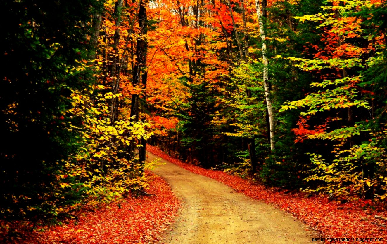 Collection of Fall Trees Background on