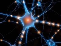 Les ravages de la canicule sur les neurones