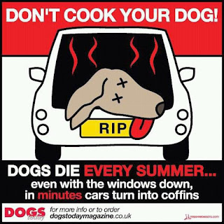 Pet Safety !!