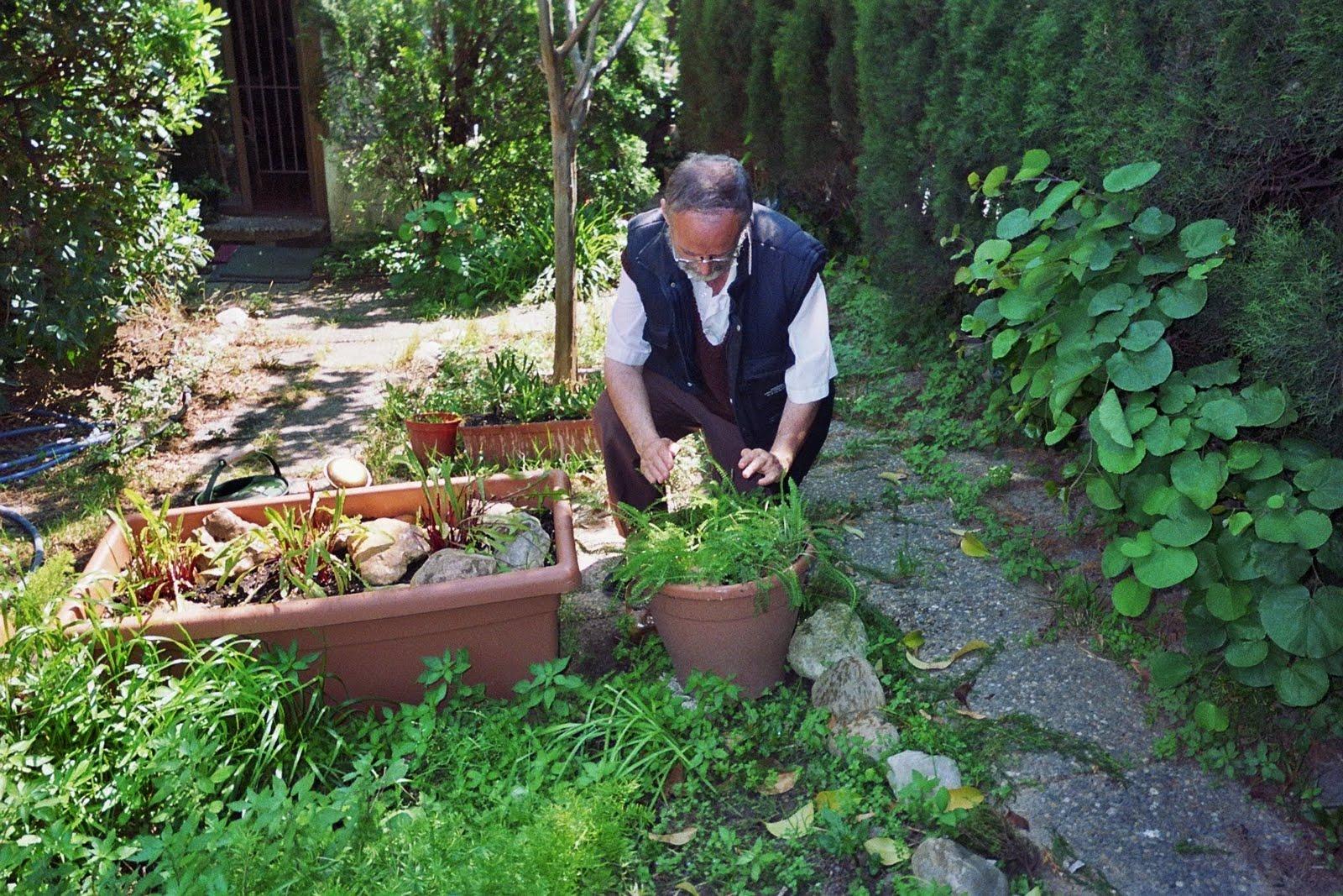 Nuestros huertos y jardines maceto huerto cuidados - Huerto y jardin ...