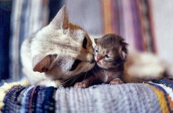 Funny cats - part 96 (40 pics + 10 gifs), cat pictures, momma cat and her newborn kitten