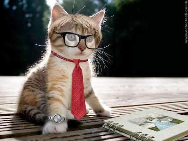 Gambar kucing sekolah lucu