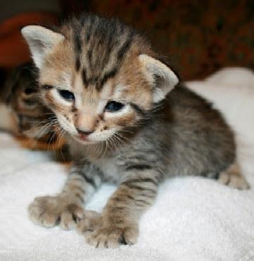 lucy cat xxx