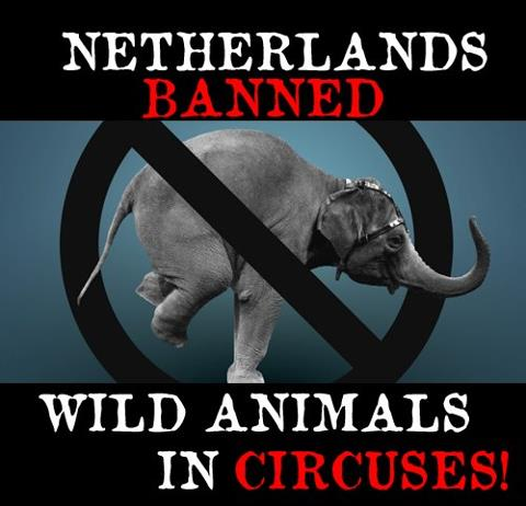 The Netherlands are the 3rd European country to ban wild animals in circuses