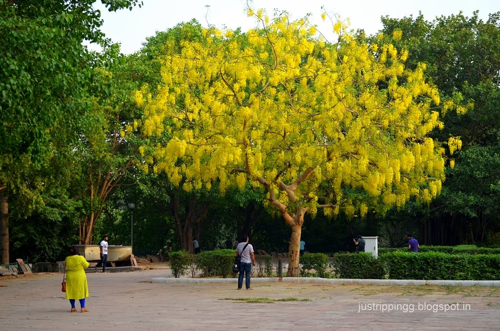 Just Tripping Love In The Times Of Amaltas