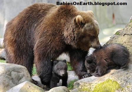 Newborn brown bear - photo#28