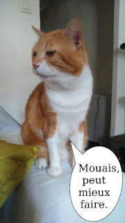 Minato, chat roux et blanc de l'école du chat libre de toulouse.