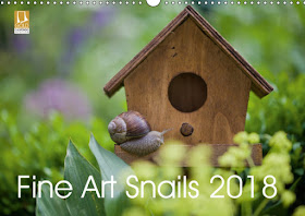 Fine Art Snail 2018 Calendar !! NEW !!