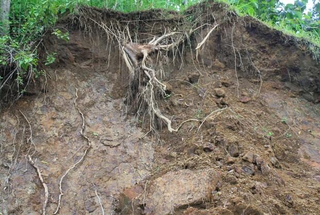 Cara Mengurangi dan Mencegah Terjadinya Erosi Tanah