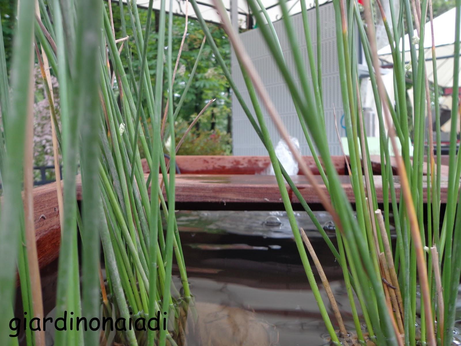 Il giardino delle Naiadi: GIARDINI E TERRAZZI 2013