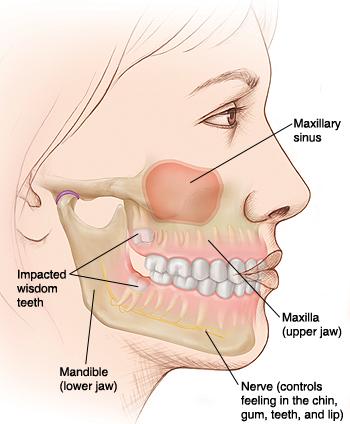 Treatment of Loose Teeth