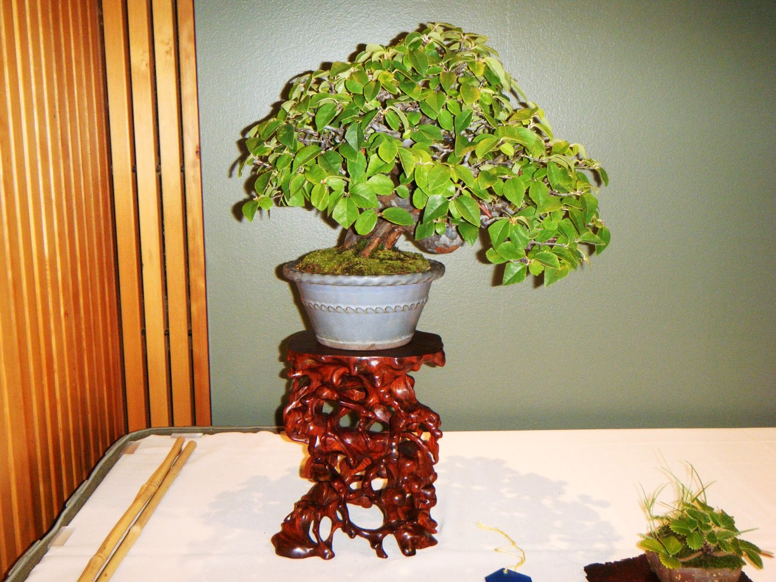 Bonsai In Hoosierland October 2015