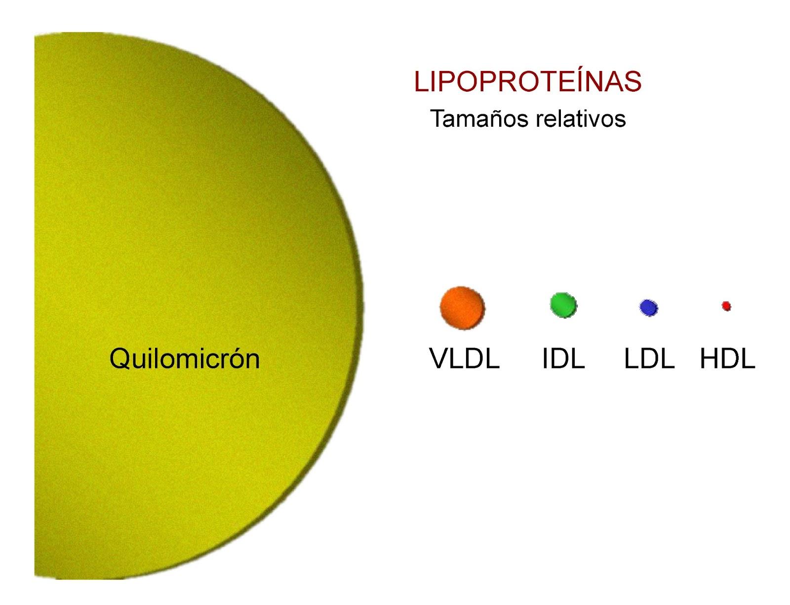 Tamaño comparativo de las principales lipoproteínas de la sangre