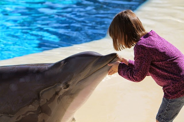 A little girl playing with dolphin