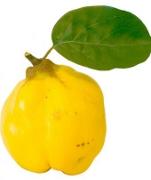 Remedii naturiste cu gutui pentru sanatatea stomacului