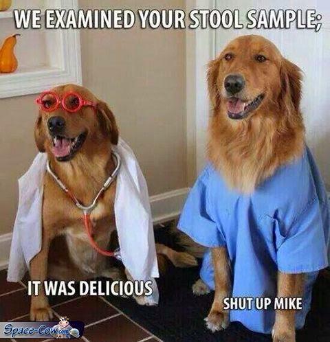 funny dog doctors pets