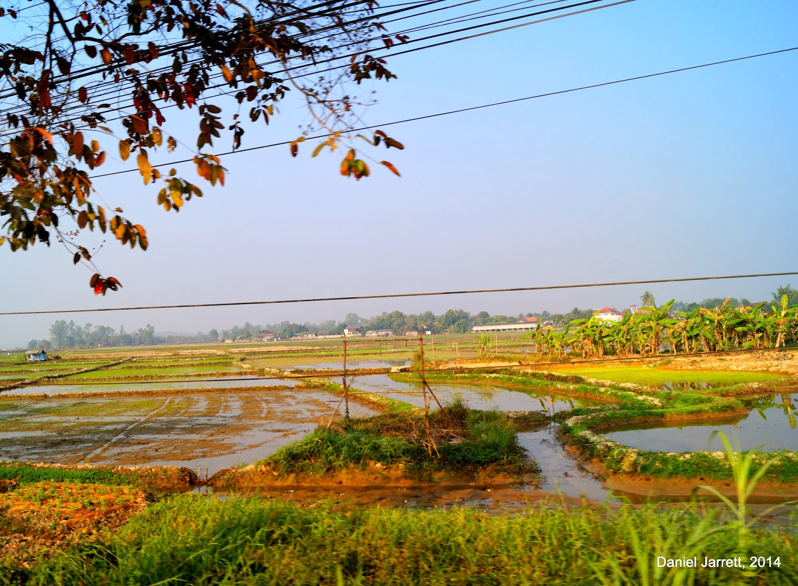 Chiang Rai Rice Fields