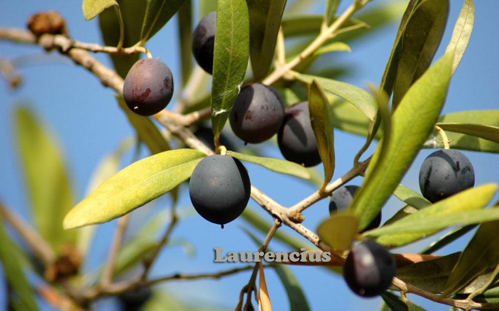 Review Wardah Olive Oil ( untuk wajah )