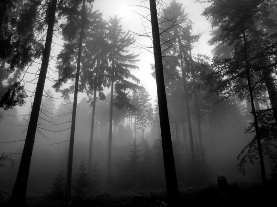 fog-on-pinterest-foggy-forest-forests-and-mists.jpg