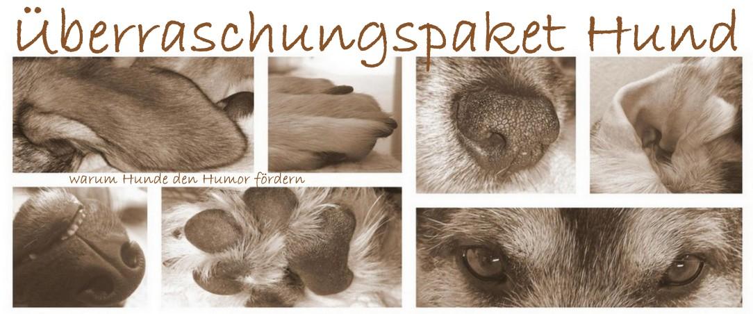 Überraschungspaket Hund - ein Hundeblog der zeigt, wie unterschiedlich Hunde doch sind