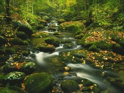 imágenes de paisajes selva