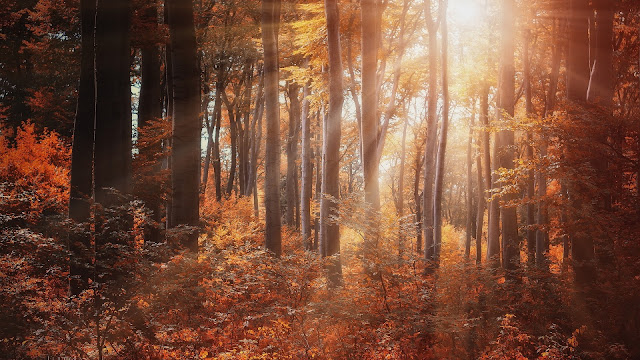 Forest Sun rays HD Wallpaper