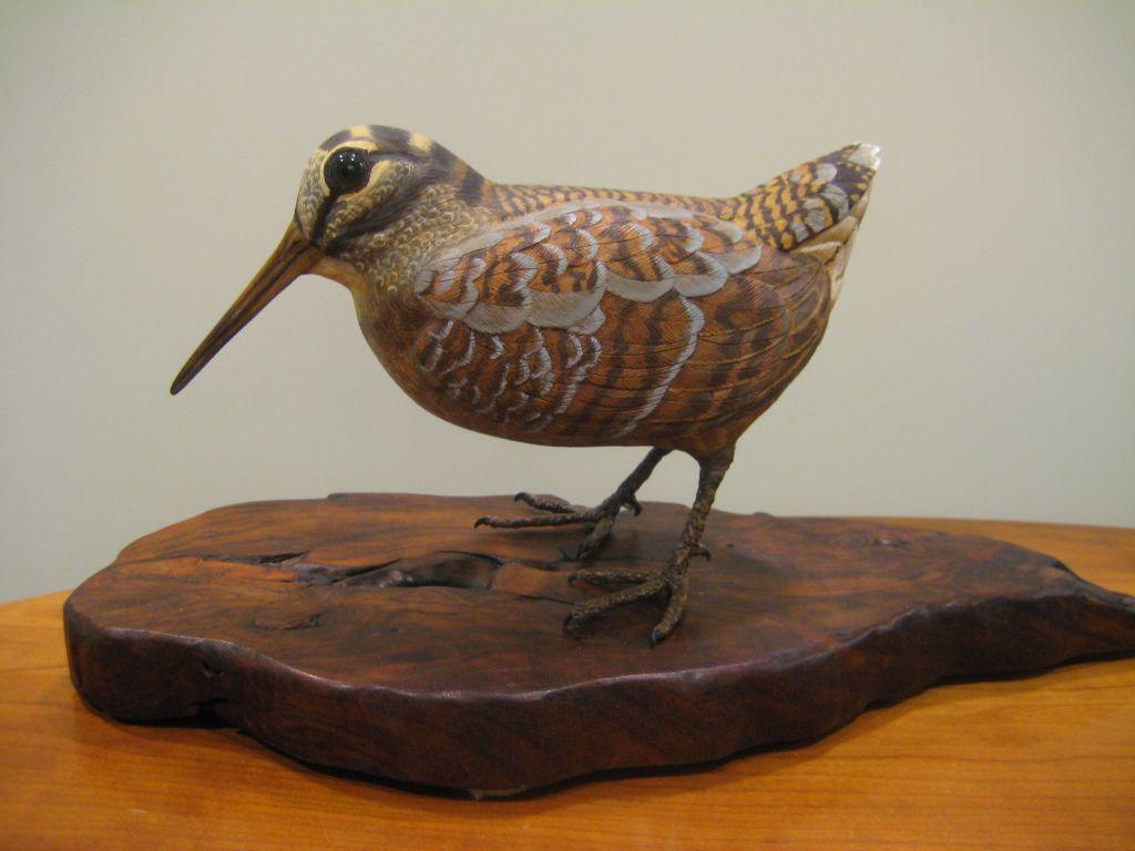 Rocky coast news at the blue hill public library bird