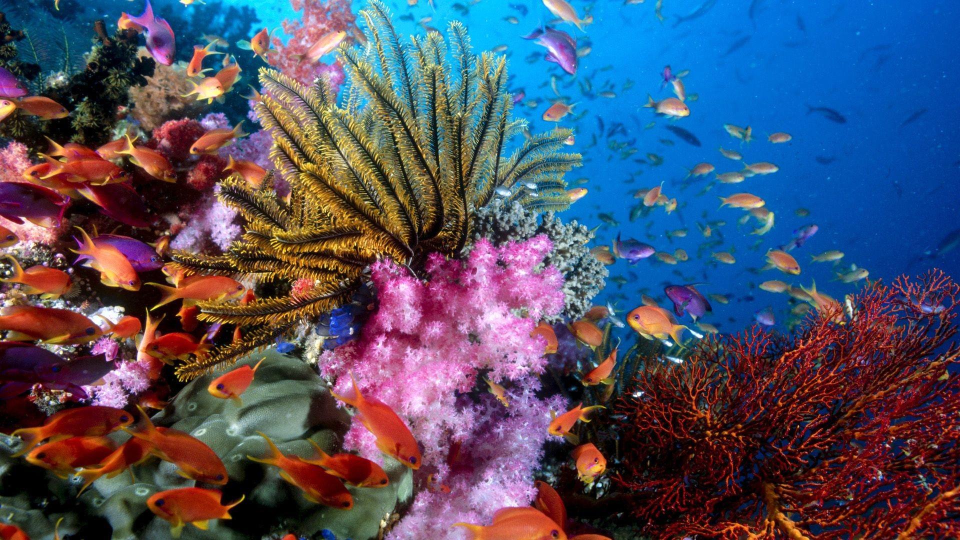 Coral Reef | Full HD Desktop Wallpapers 1080p