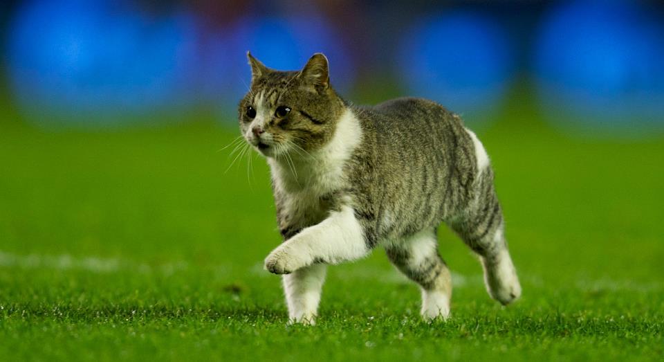 @AnfieldCat Кот в Ливерпуле стал звездой интернета