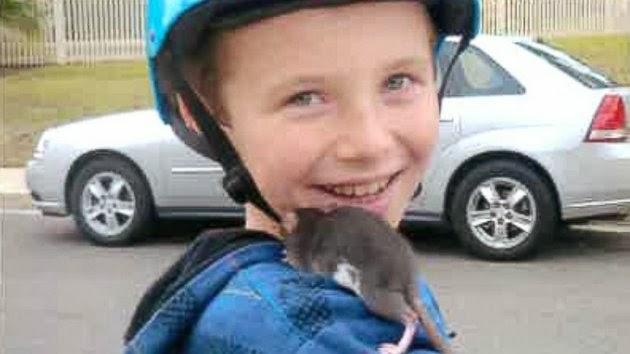 Boy dies after fever from pet rat