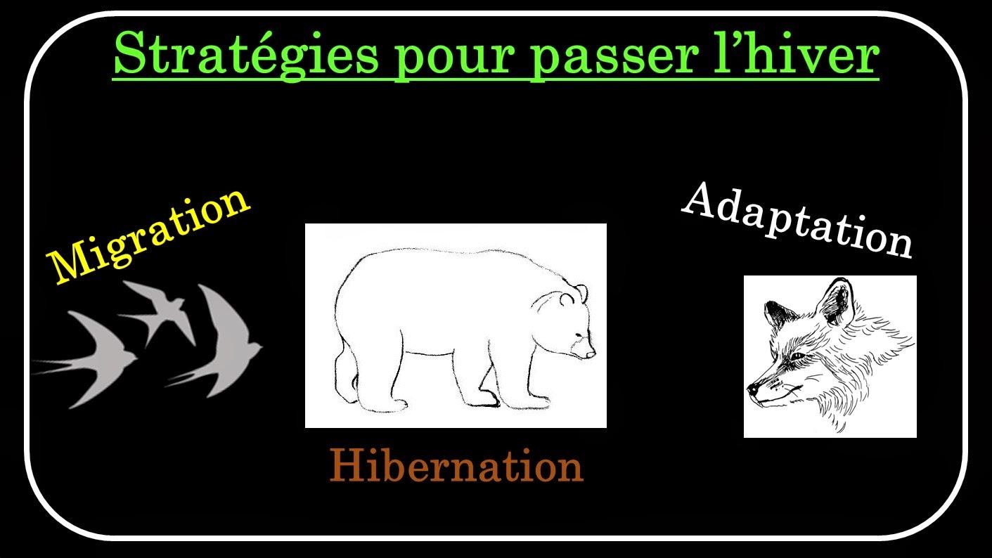 Le labo d'Anissa - SVT: Chapitre 1 : Le peuplement animal au cours des ...